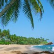 Stock Photo: Beach with coconut palm trees