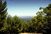 Spectacular views overlooking Adelaide city framed by native Australian trees — Stock Photo