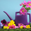 Spring concept with purple watering can and colorful flowers — Stock Photo
