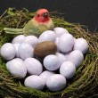 One chocolate Easter egg in bird's nest with sugar coated candy marble eggs. Vertical. — Stock Photo #20106943