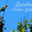 Australian native bird, Rainbow Lorikeets against a blue sky with text greeting message. — Stock Photo