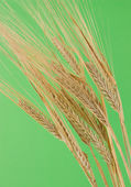 Dried rye — Stock Photo