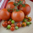 Tomatoes and Red Kitchen Towel — Stock Photo