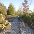 Abandoned Railroad tracks — Stock Photo