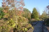 Abandoned Railroad tracks — Stockfoto