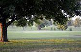 Scenic Golf Course Vistas — Stock Photo