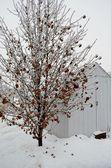 Led porostlých větví — Stock fotografie