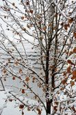 Ice covered branches — Stock Photo