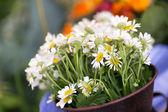 Vázu s květinami — Stock fotografie