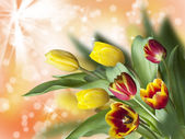 Colorful tulips on illuminated background — Stock Photo