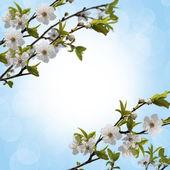 苹果树枝 — 图库照片