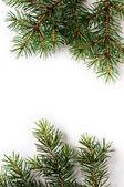 Christmas tree on a white background — Stock Photo