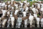 Buffalo skallen i templet i thailand — Stockfoto