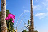 ピンク orchid3 — ストック写真