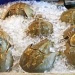 Horseshoe crab — Stock Photo #36835575