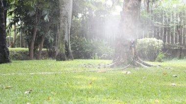 Sprinkler spraying water on back yard green grass — Vídeo de Stock