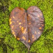 Heart Leaf — Foto Stock