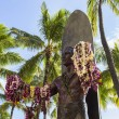 Stockfoto: Duke Kahanamoku