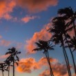 Sunset Palm Trees 1 — Stock Photo