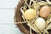 Nest Eggs — Stock Photo