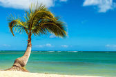 Palm Tree at the Shore — Stock Photo