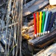 Colored pencils in the forest — Stock Photo