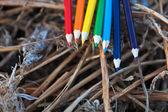 цветные карандаши на сухой травы — Стоковое фото