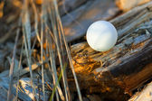 Ping pong ball in the forest — Stock Photo