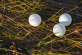 Three ping pong ball in the forest — Stock Photo