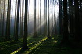 Light rays in the forest — Stock Photo