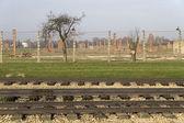 Auschwitz-birkenau — Foto Stock