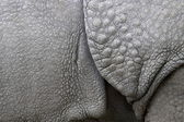 Structure of the skin of an Indian rhinoceros in a zoo in the Netherlands — Stock Photo