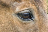 Look at a horse, Netherlands — Stock Photo