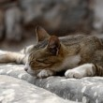 Cat is resting on the ruins of Ephesus, Turkey — Stock Photo