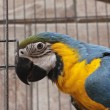 Macaw parrot in a cage in Jerusalem, Israel — Stock Photo