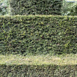 Hedge on estate Verhildersum, Netherlands — Stock Photo