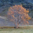 Tree in autumn colors mountain valley — Stock Photo #33612179