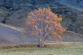 Tree in autumn colors a mountain valley — Stock Photo