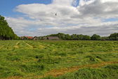 Mown grassland in Vanenburgerallee in Putten, Netherlands — Stock Photo