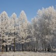 Winter in Siberia. — Stock Photo