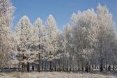 Winter in Siberia. — Stock Photo