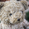 Very fuzzy teddy bear — Stock Photo