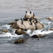 Seabirds resting on rocks in the ocean. — Stock Photo