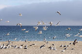 Flock of seagulls fly along a beach — Stock Photo