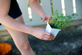 Woman picks up a plant in a white container — Stock Photo