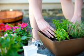 Hands place plant in square brown planter — Stock Photo