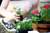 Kneeling woman plants a pink flower — Stock Photo