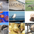 Stock Photo: Composite of animal and critter images