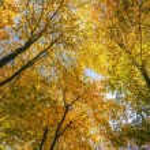 Autumn in Russia, 2012 — Stock Photo #14796317