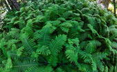 Fern bushes — Stock Photo